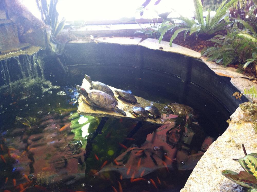 Proud turtles