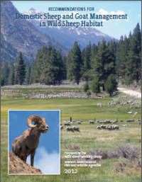 The Western Association of Fish and Wildlife Agencies issued this 2012 report with recommendations for managing domestic sheep in bighorn sheep habitats.
