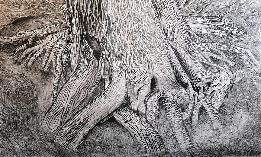 "Katrina Bello, ""desert spring cedar"" (2016). Charcoal on paper, 60""x100""."