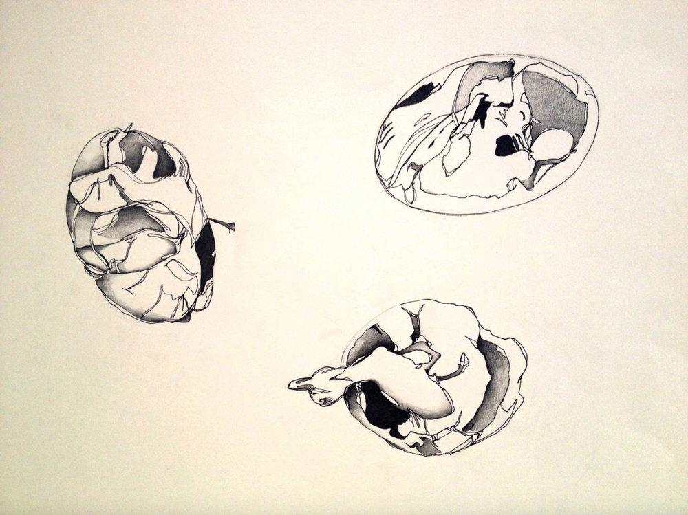 "Jeanne F. Jalandoni, ""Balut Study"" (2013). Graphite, ink on bristol, 20""x16""."
