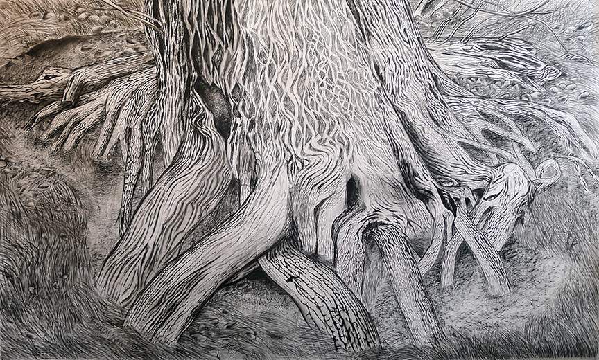 "Katrina Bello,  Desert Spring Cedar , 2016. Charcoal on paper, 60""x100""."