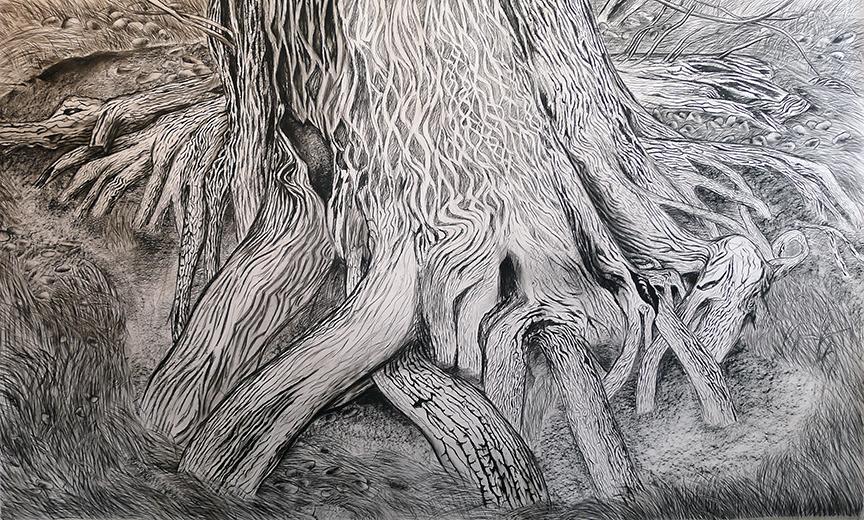 "Katrina Bello, Desert Spring Cedar , 2016. Charcoal on paper, 60""x100""."