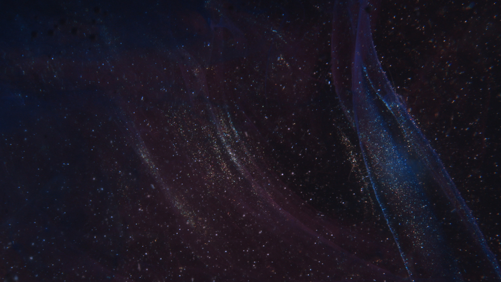 ADI Stars 03.jpg