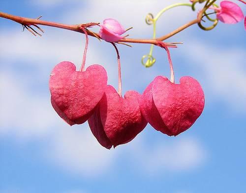 valentine-day-