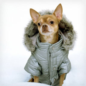 This picture has nothing to do with my blog. It's just a dog in a coat. A DOG in a COAT.