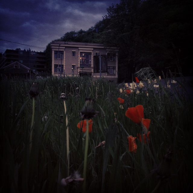 House and flowers by Alana Morosky
