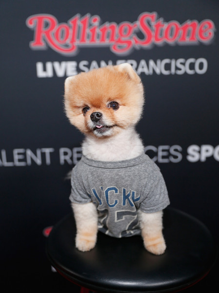 Jiff The Pomeranian attends Rolling Stone LIVE San Francisco party presented by Talent Resources Sports