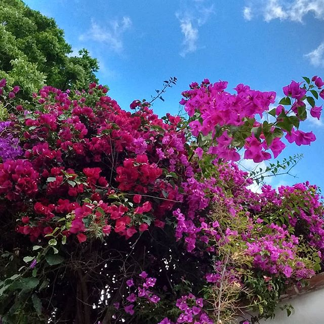 I almost forgot that I had such a long day after seeing this beautiful bougainvillea! Estoy en Antigua, Guatemala! :)