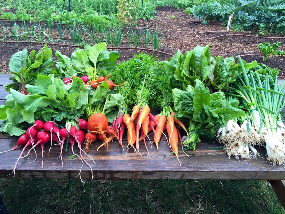 Photo Courtesy Of: UT Microfarm