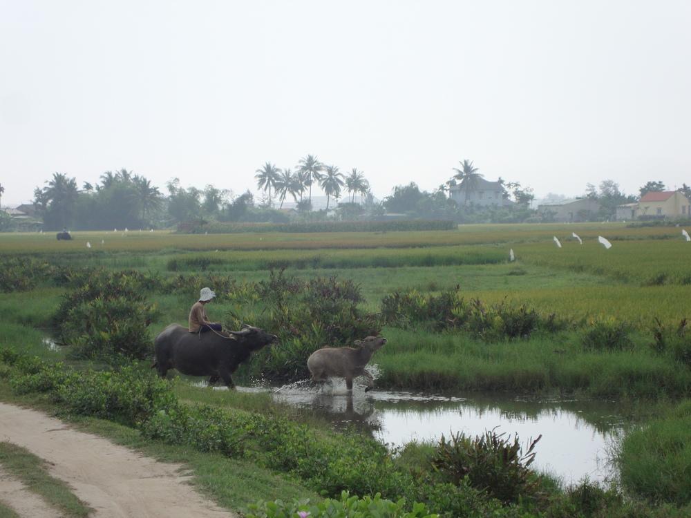Vietnam (18).JPG