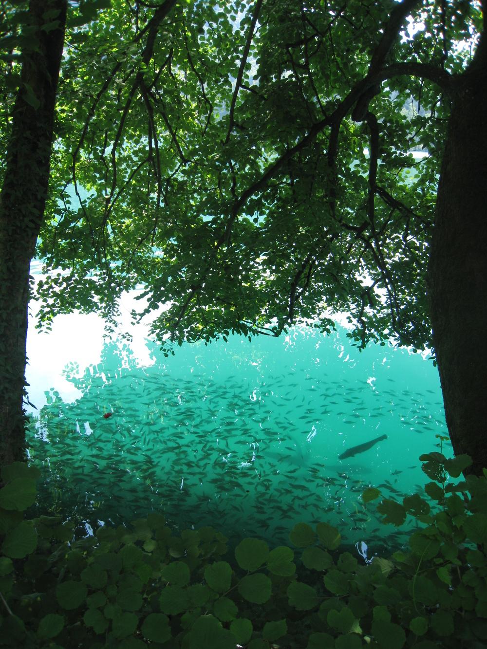 Lake Bled (30).JPG