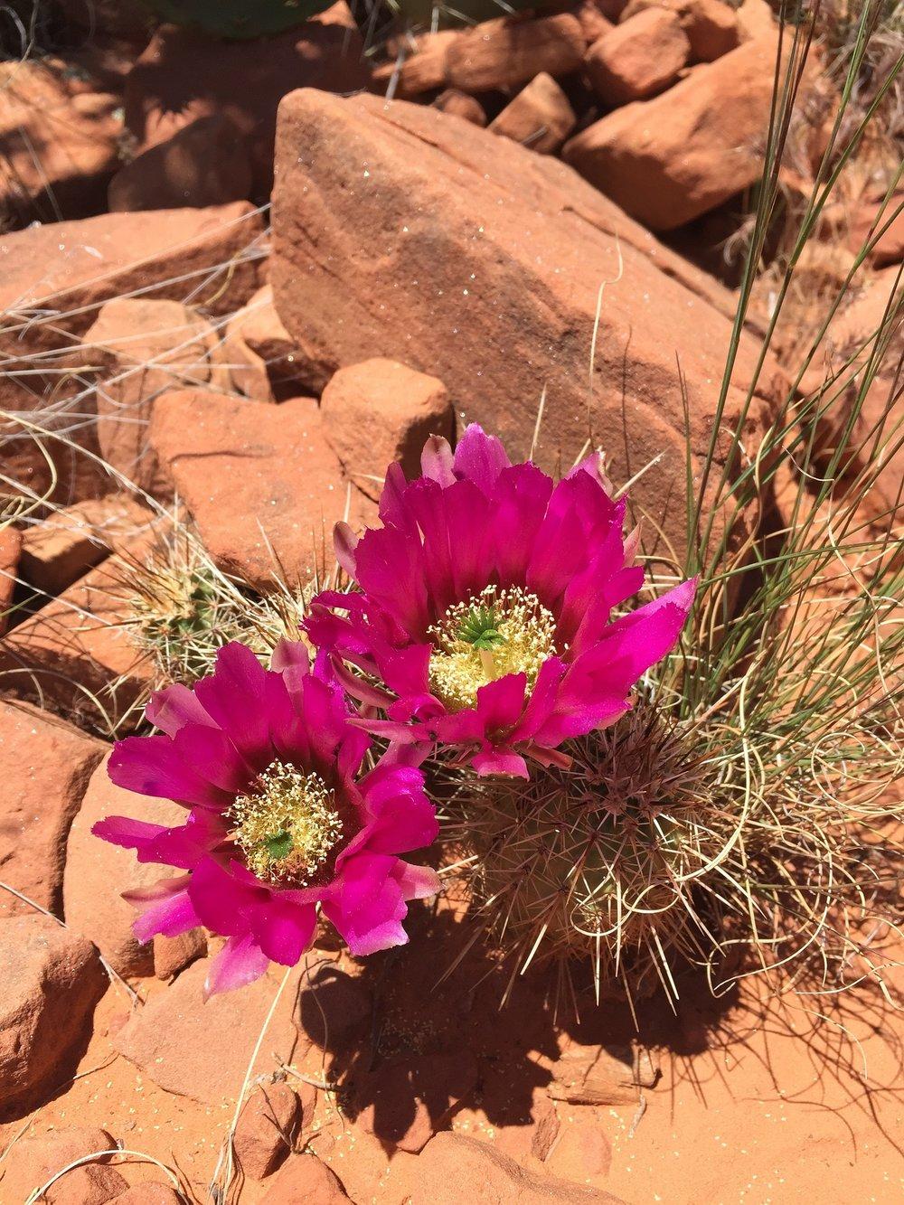 Desert_bloom