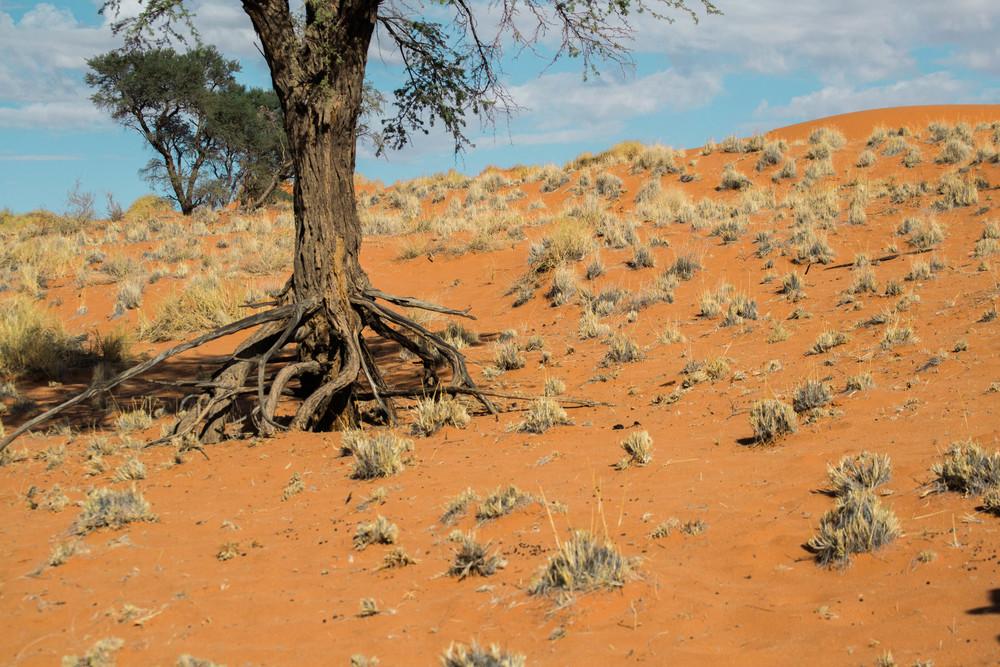 Namib+32.jpg
