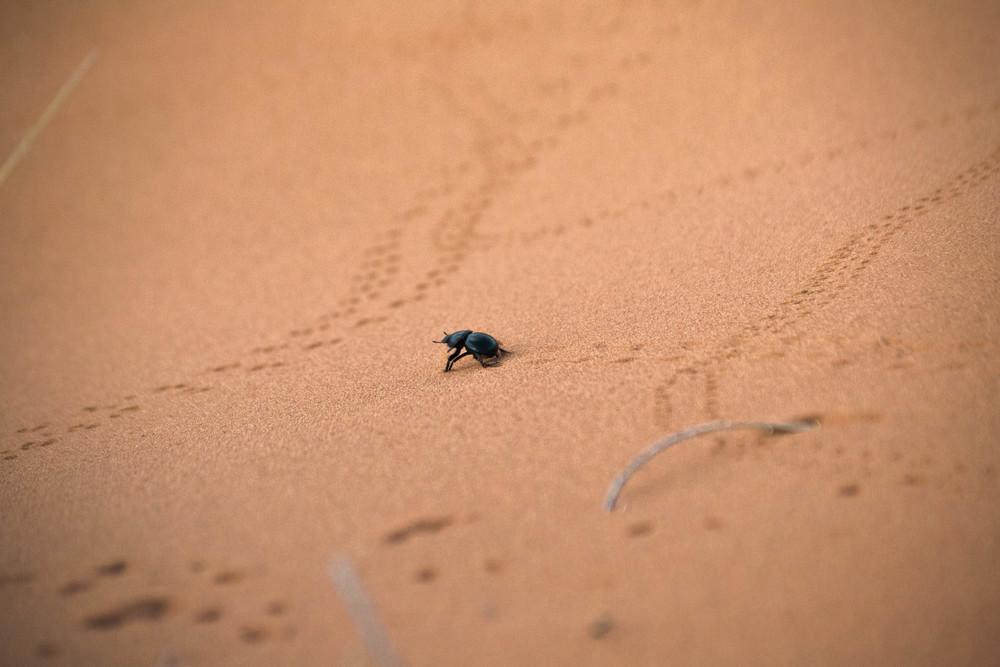 Namib+29.jpg