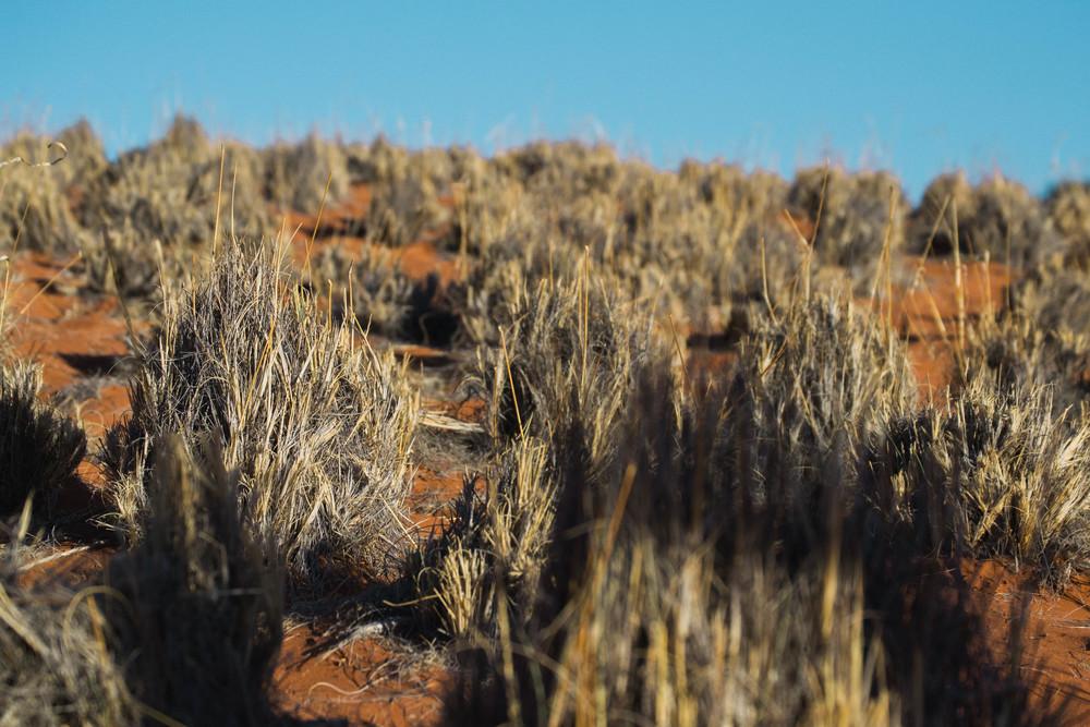 Namib+11.jpg