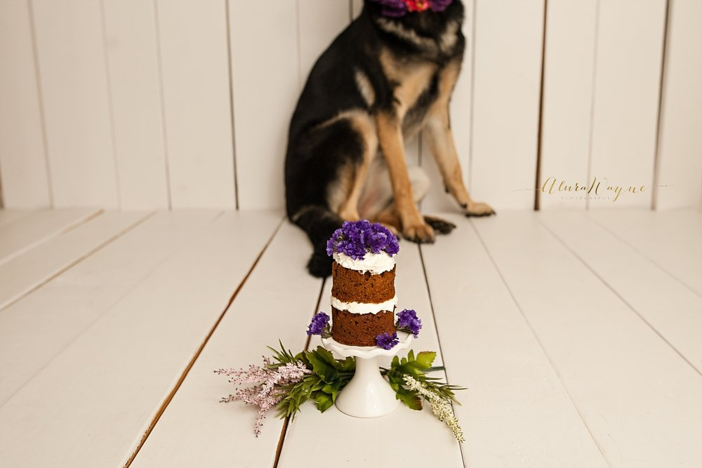 nashville photographers | dog cake smash | alurawayne photography