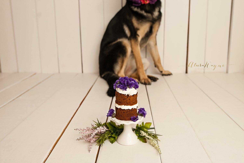 Dog Photo Edit Editing Sample