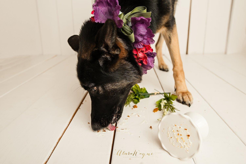 dog-photo-edit-photo-editing-sample