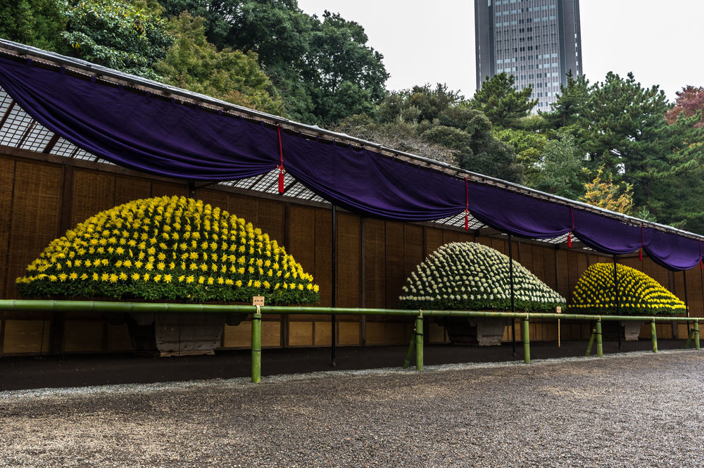 Three ozukuri on display at Shinjuku Gyoen