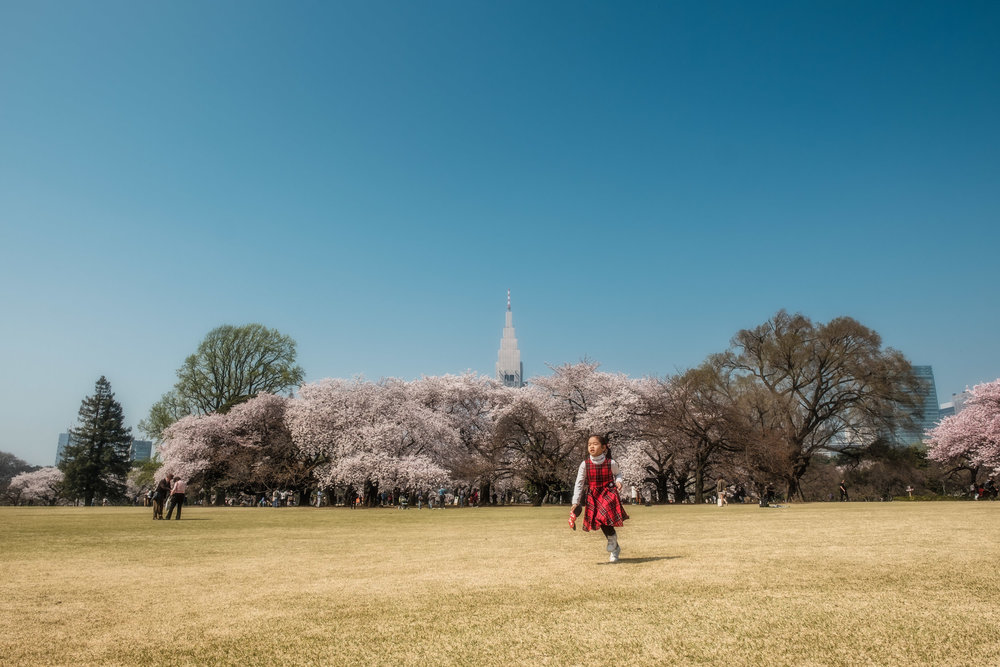 Shinjuku Gyoen, cherry blossoms, the NTT DOCOMO Building and one kid running free