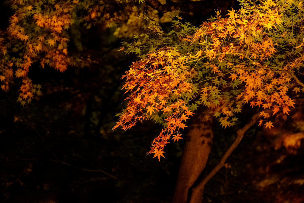 The autumn leaves under the light