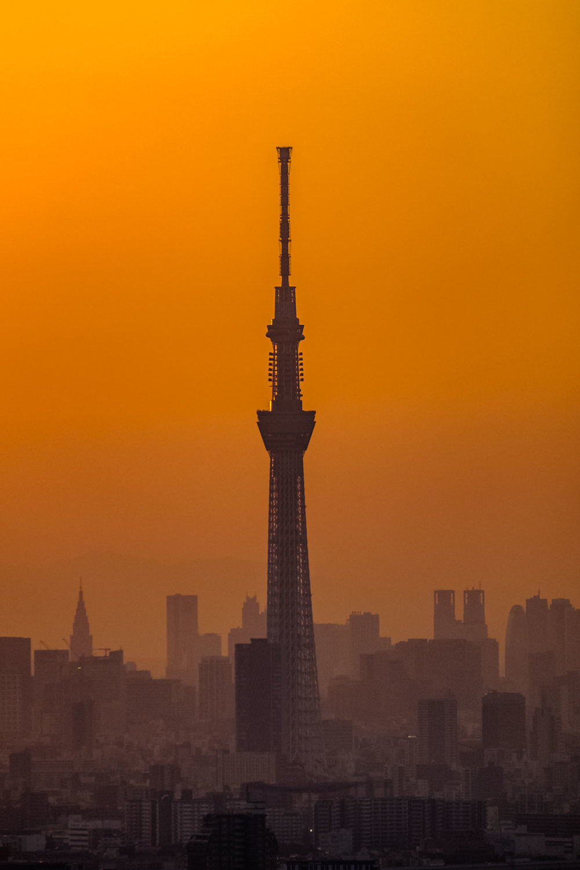 Tokyo Skytree under a golden sunset