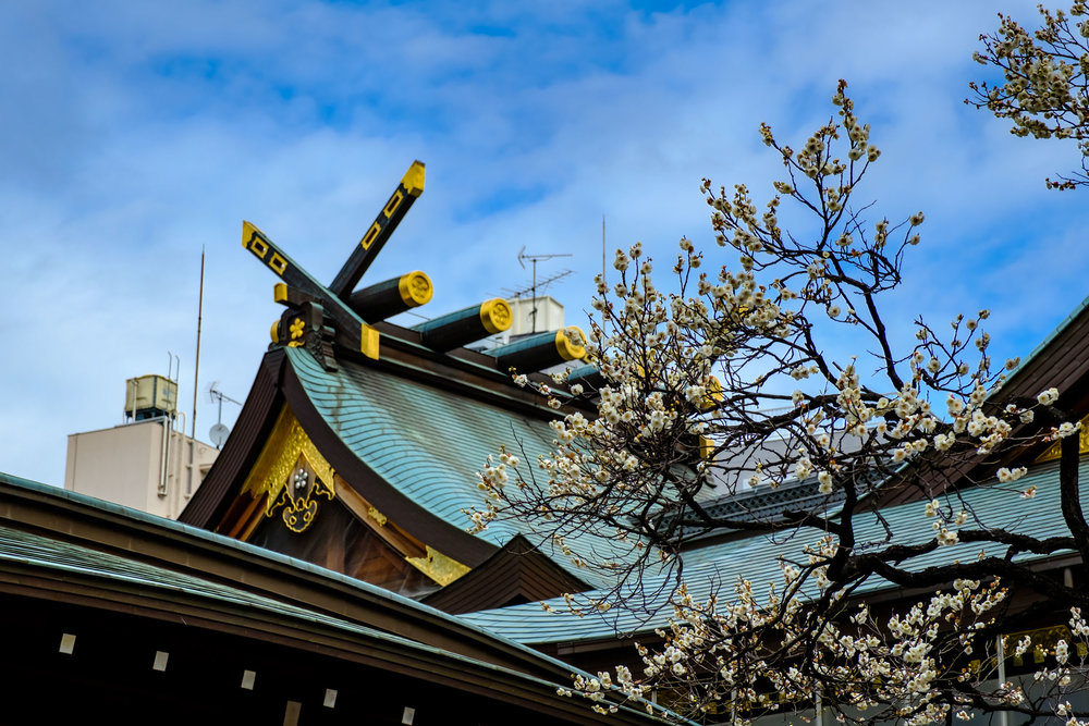 The main hall of Yushima Tenjin with some plum blossoms
