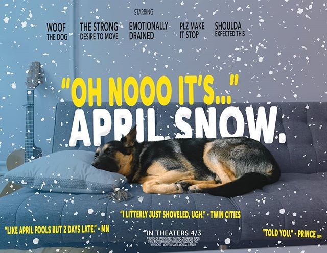 How Woof felt about the SNOW in April. #minnesota #snowinapril #mpls