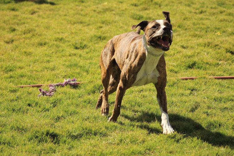 Tucson based dog training tips tricks and treats dog training dog potty training solutioingenieria Images