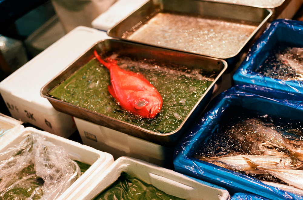 Tsukiju Fish Market