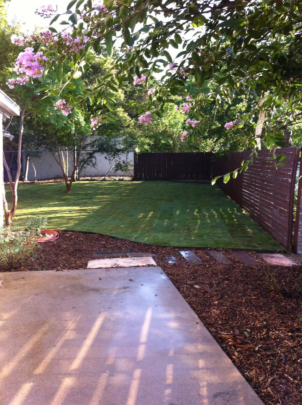 815 backyard.jpg