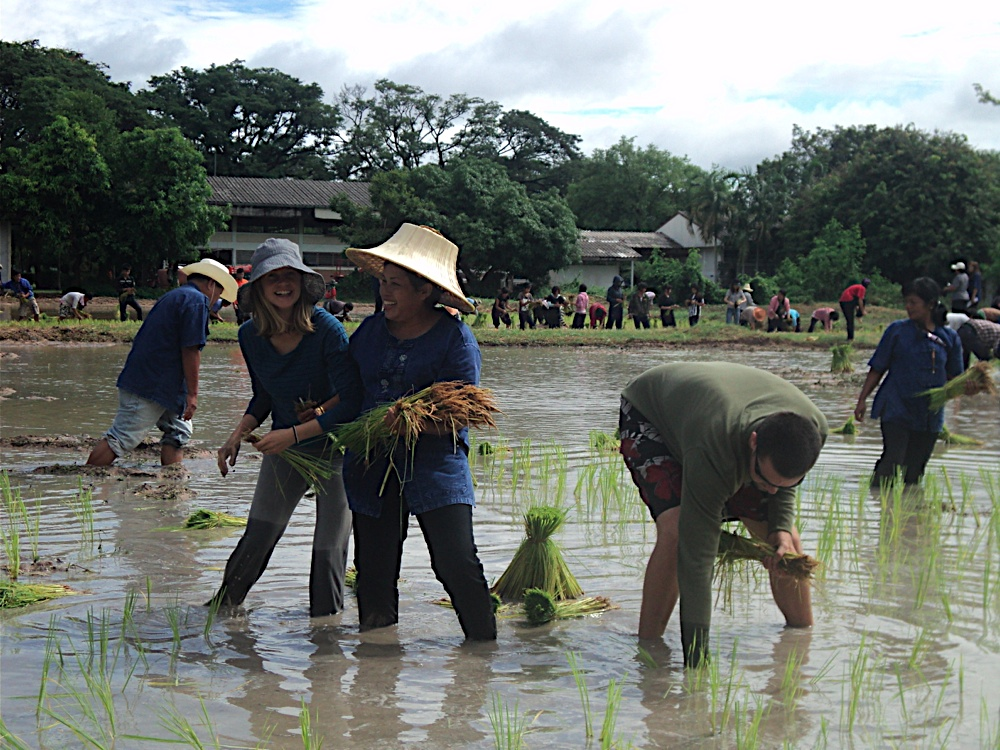 Planting rice at a Thai agricultural college. Side note: Thai people really are the friendliest.