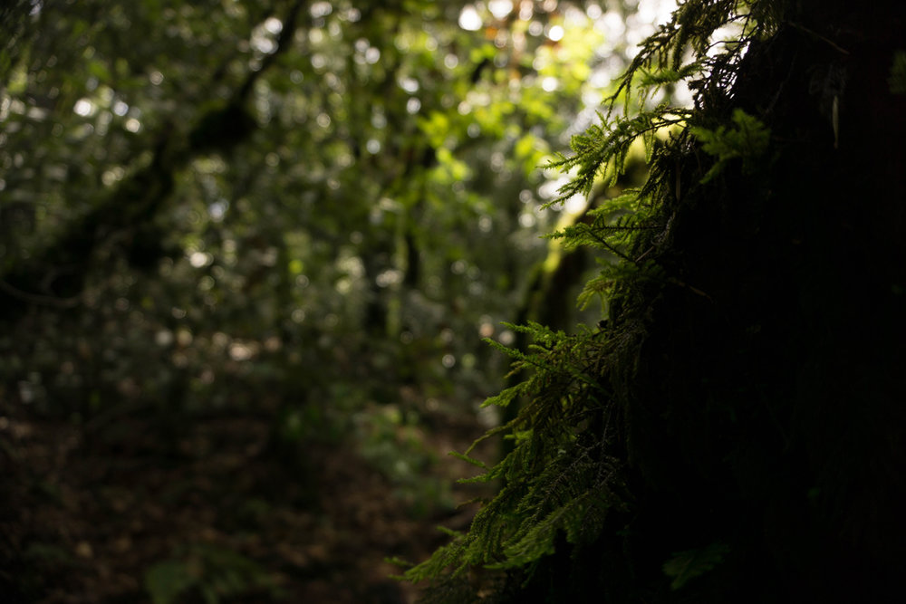 tree moss2.jpg