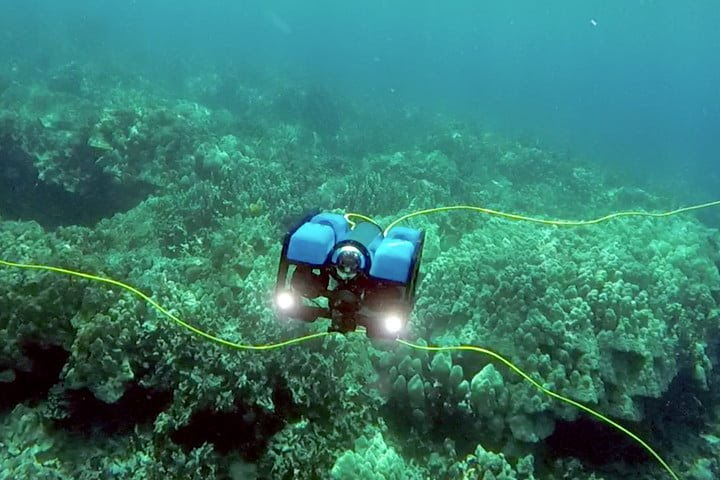 If you want to explore the underwater life in the harbor of Copenhagen.    Then you can rent our homebuild ROV (Remotely Operated Vehicle).