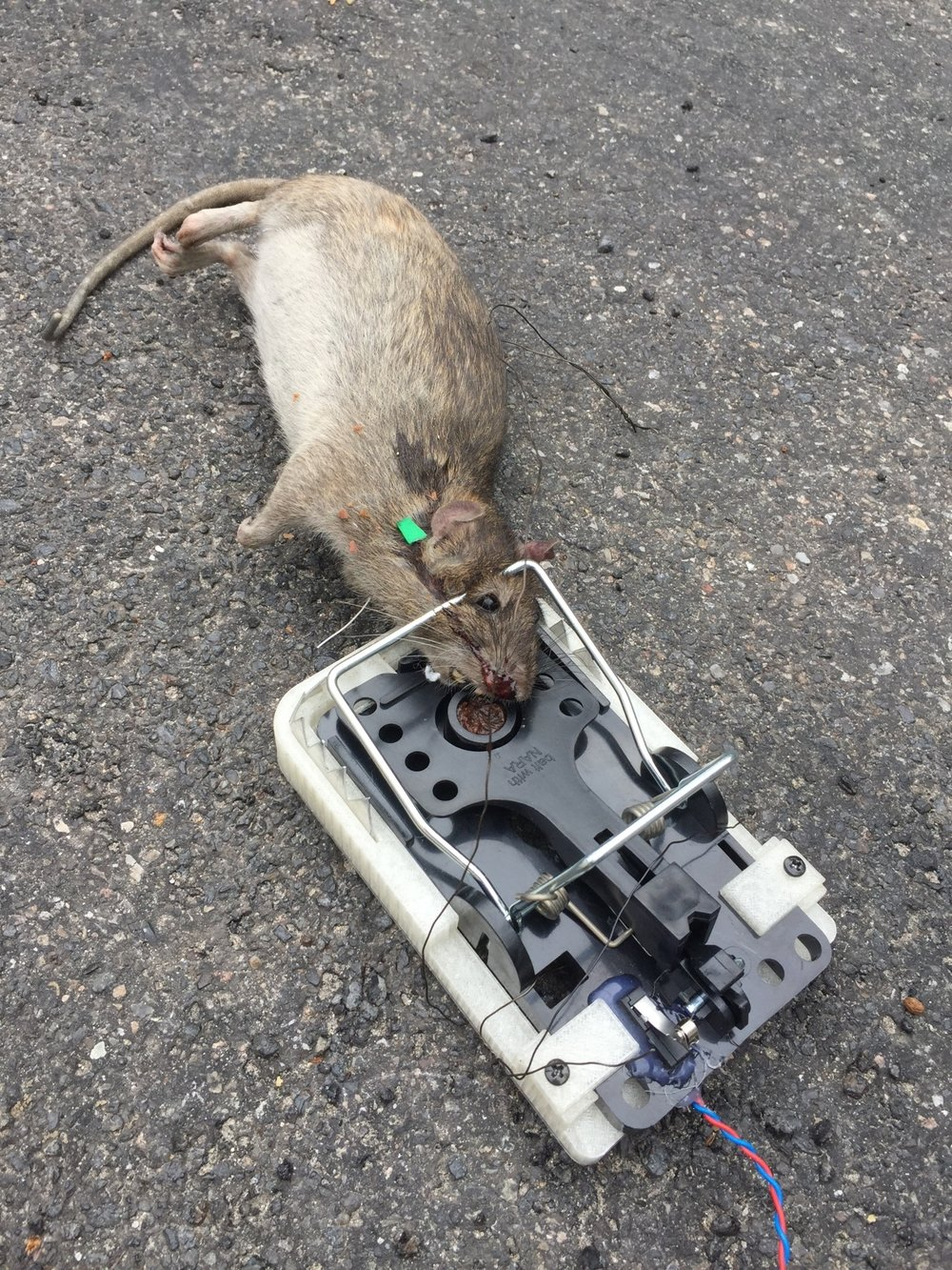 Prototype of a smart rat trap with sensors  By the pest unit, Copenhagen Solutions Lab and Underbroen