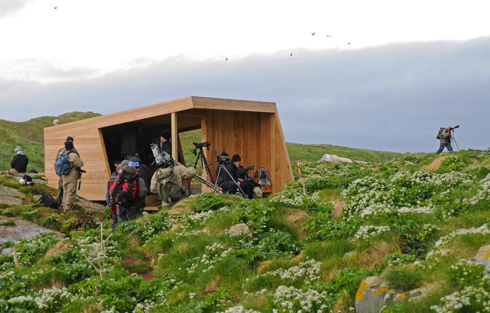 Hornøya birders TAmundsen Biotope.jpg