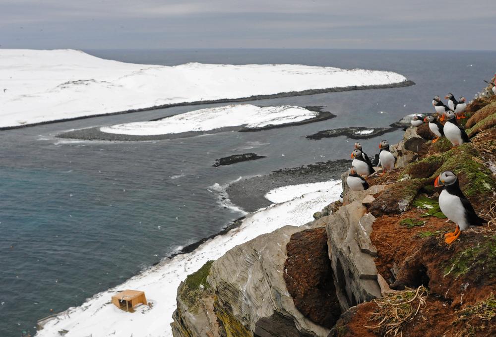 hornøya birdcliff top TAmundsen Biotope.jpg