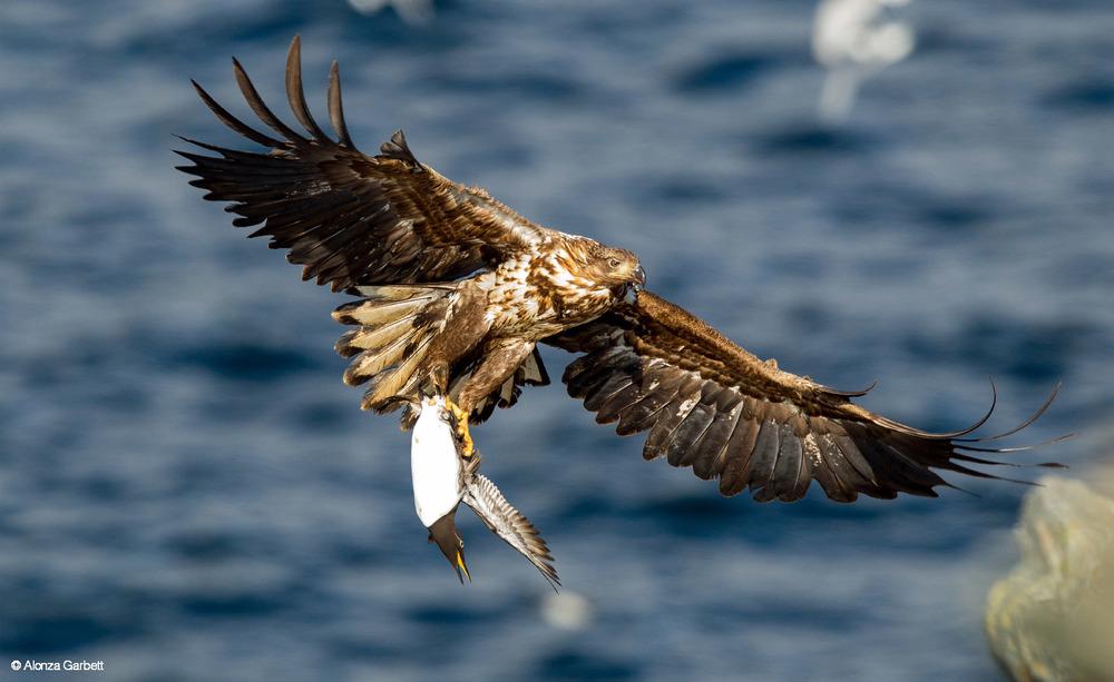 the hunt eagle.jpg