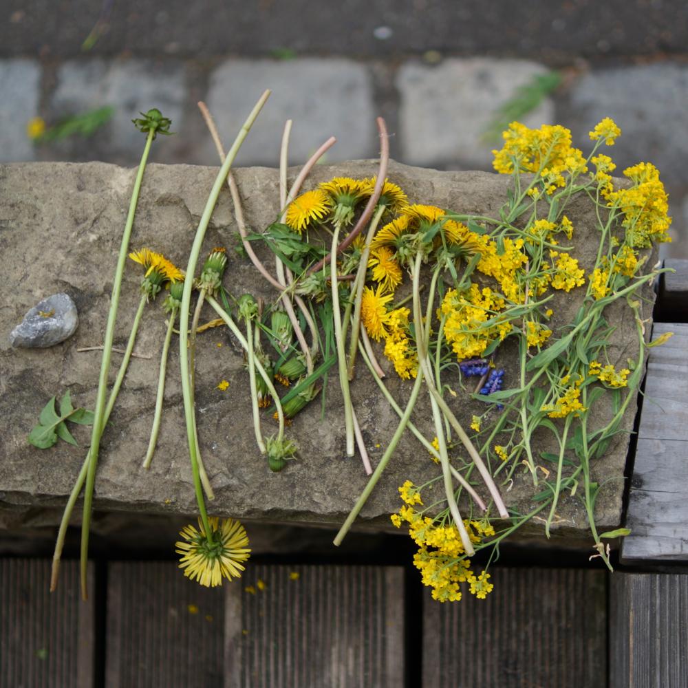 Eine Sammlung aus Blumen und Steinen im Frühling (35mm, f/1.8,1/250 Sek., ISO 100)