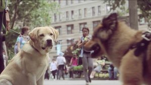 THE BLOG PetBorough New York - Nyc subway bans dogs unless fit bag new yorkers reacted