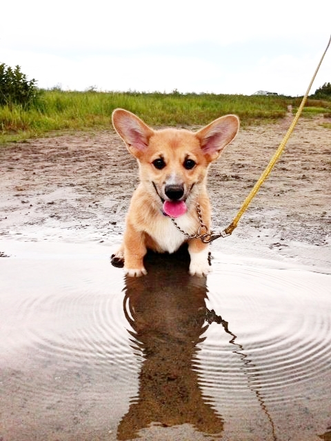 They will always walk through or sit (or both) in a puddle.