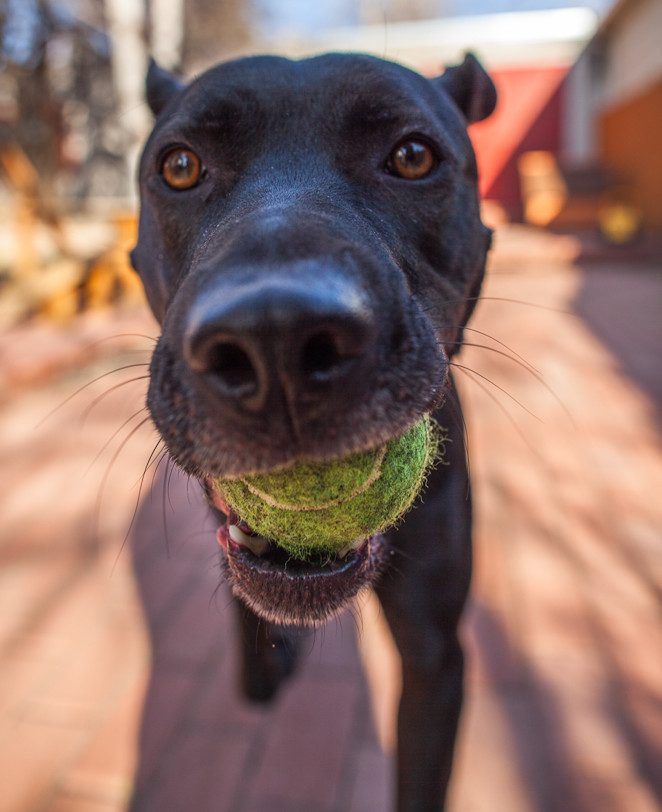 They won't give you the ball. Period :-D (Image credit:  Pawsco )