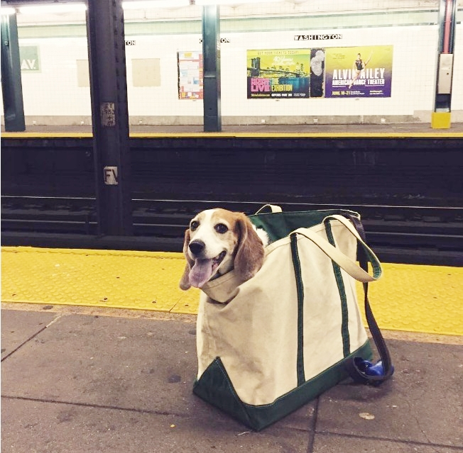dogs-in-nyc-subway-petbough-new-york