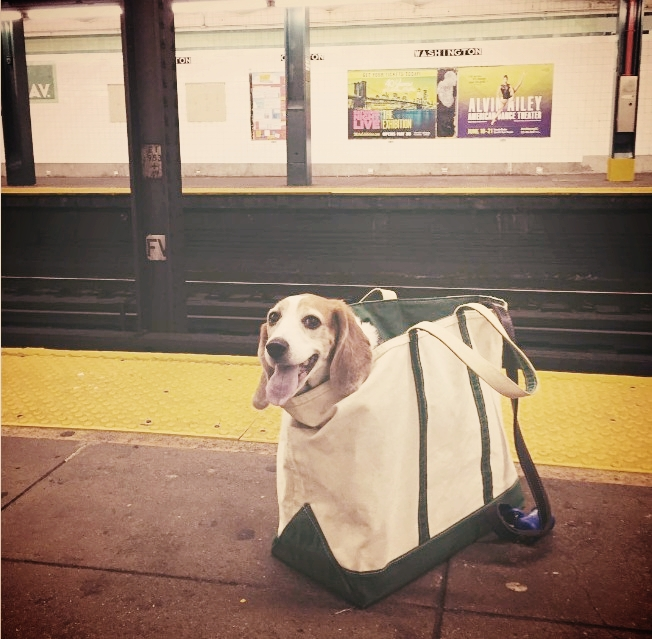 New York City Subway Bans Dogs Unless They Fit Into A Bag - Nyc subway bans dogs unless fit bag new yorkers reacted