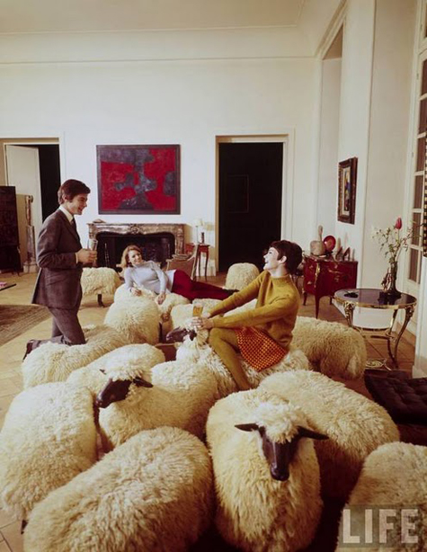 Sheep-for-suits
