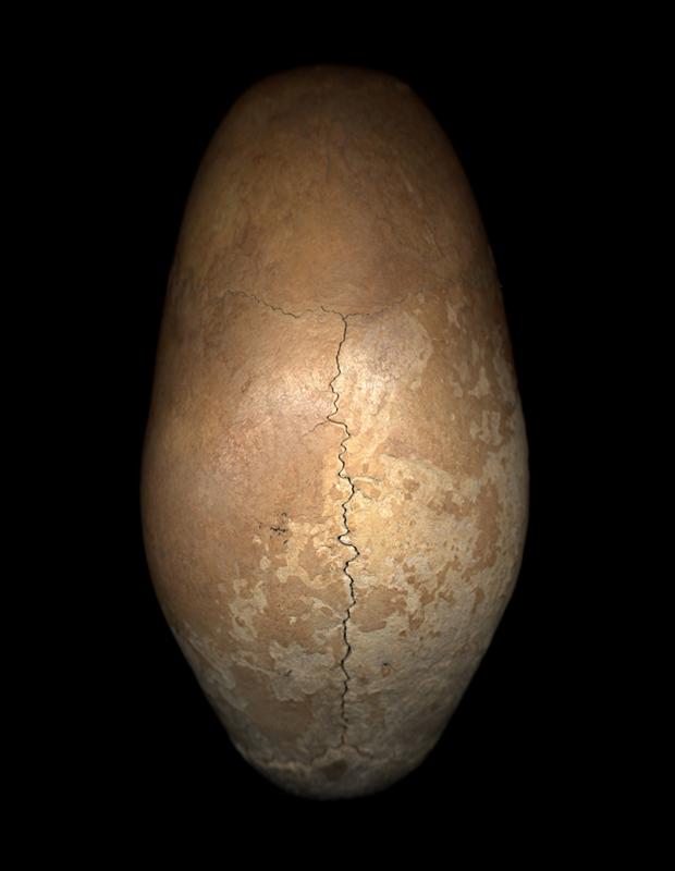 Skull 1large.jpg