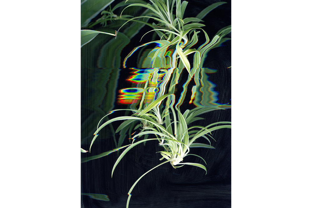 Chantal Faust,   Plant Life   4, Digital Print, 120x70cm, 2014