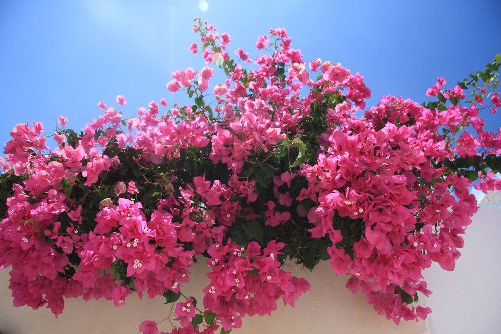 flowers-11131_1920.jpg