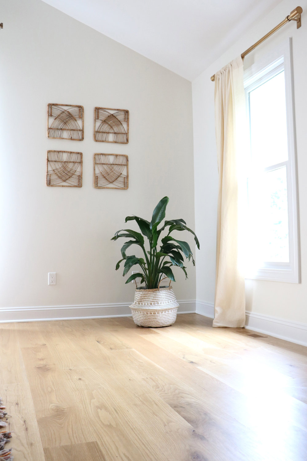 5 easy to care for houseplants | root + dwell