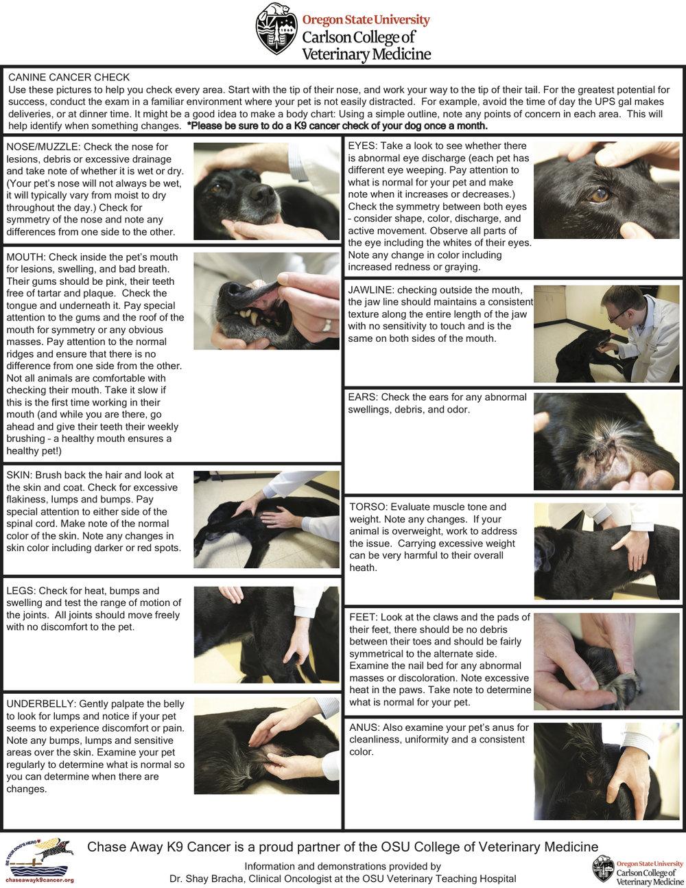 Canine-Cancer-Check-Flyer.jpg